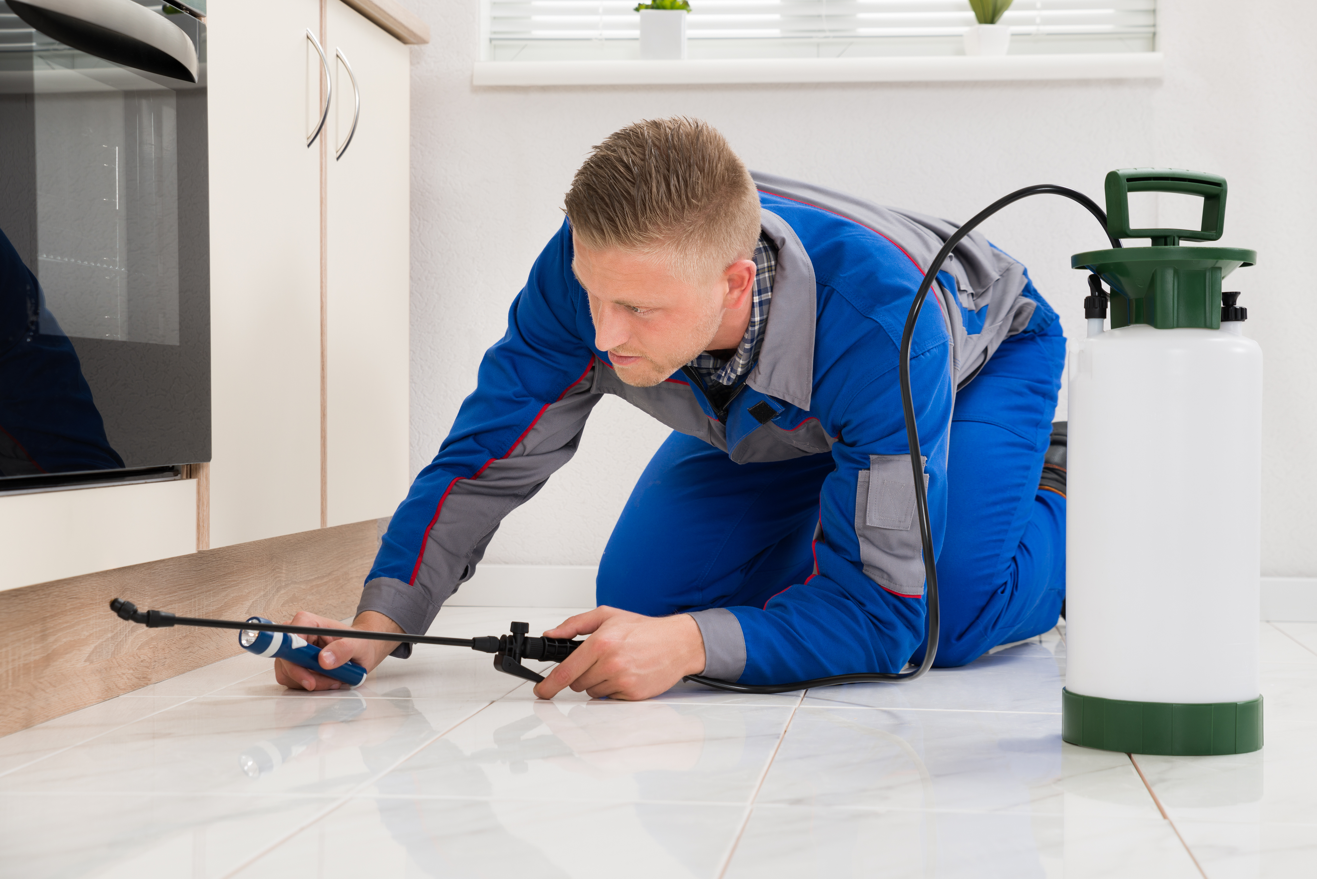 Strategies For Selecting A Reputable Pest Control Company